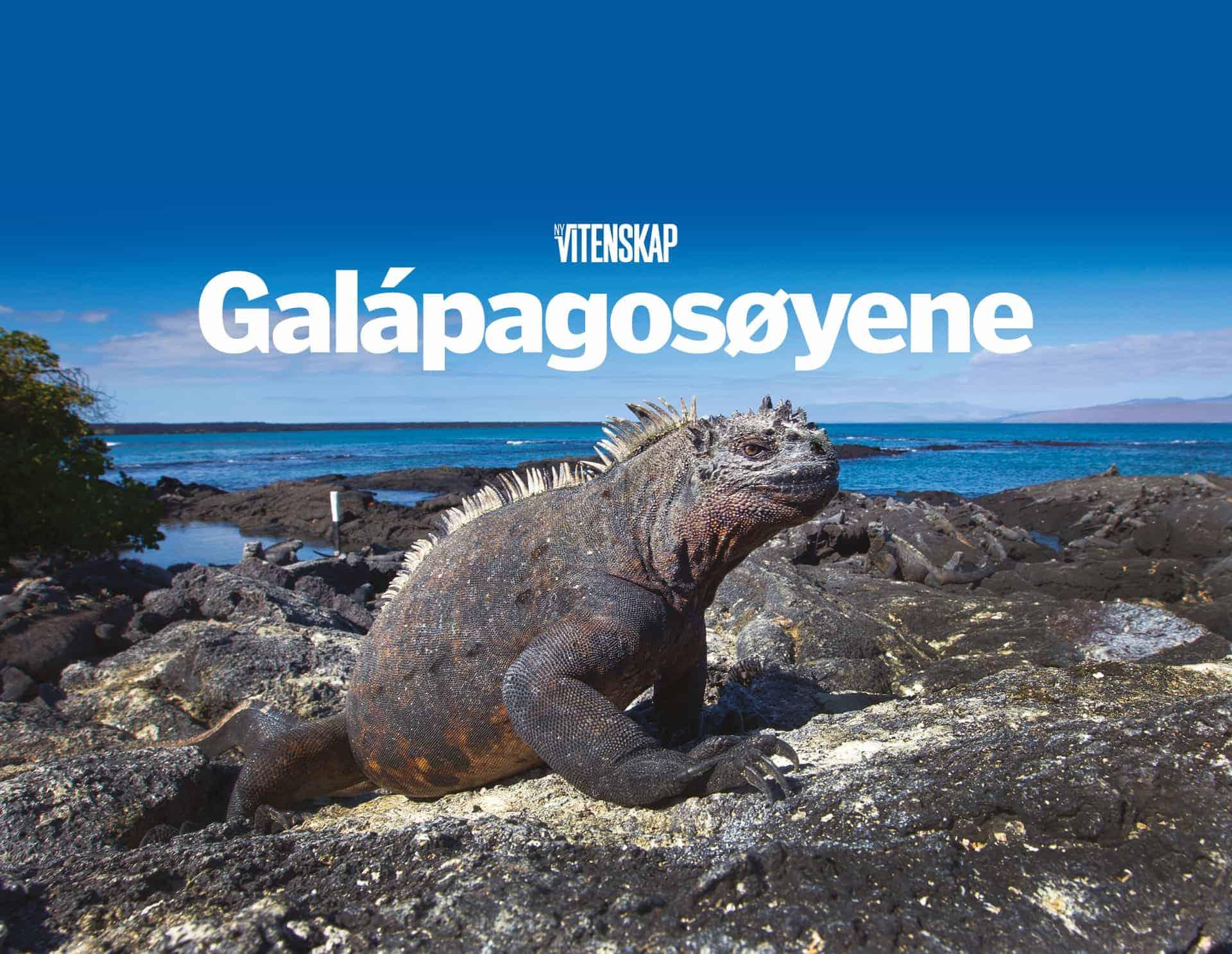Galápagosøyene