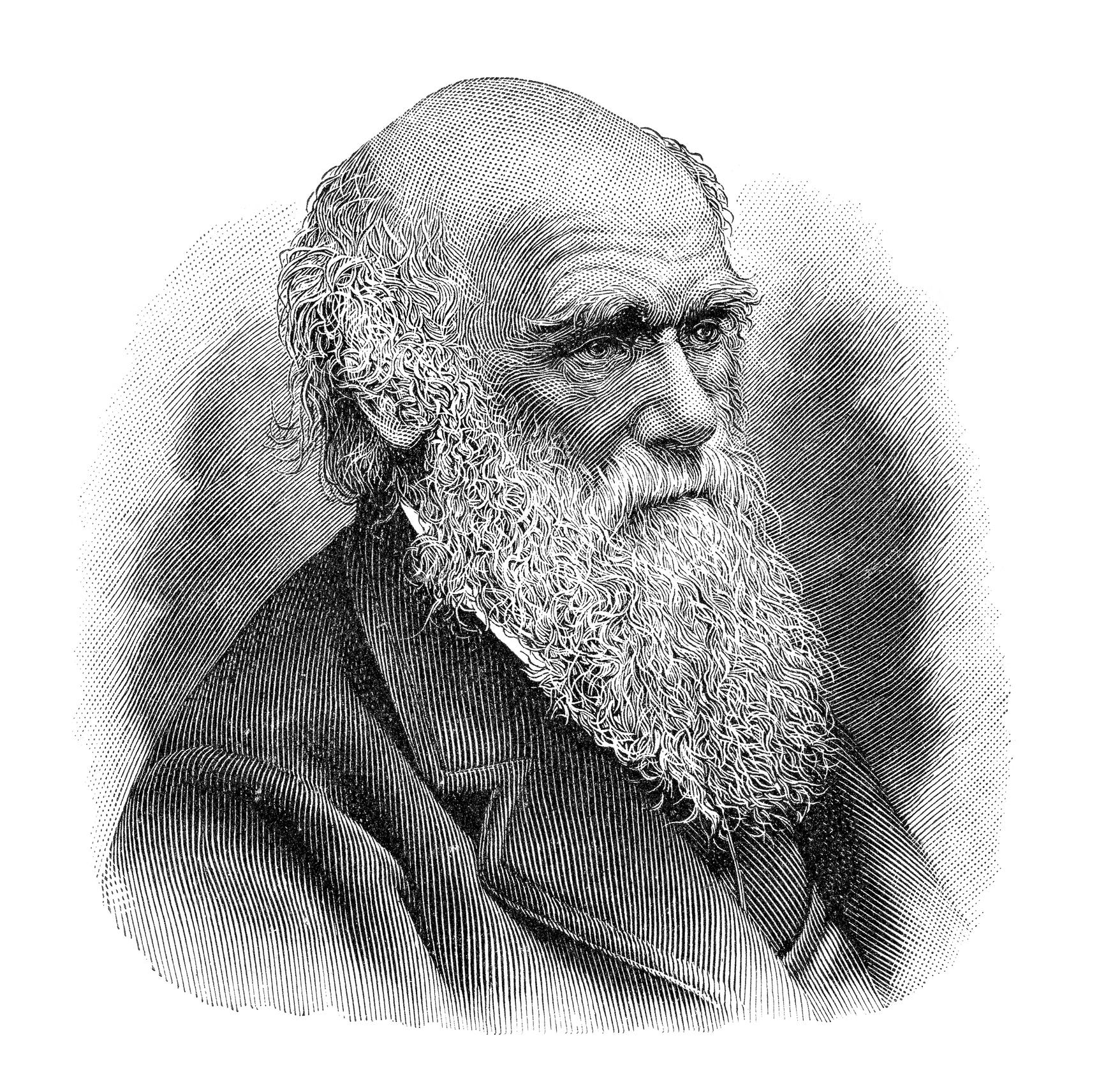 Charles Darwin illustrasjon