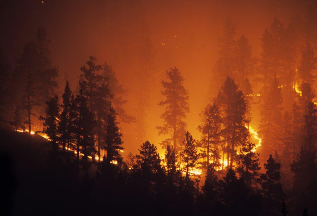 Skogbrann, Colorado