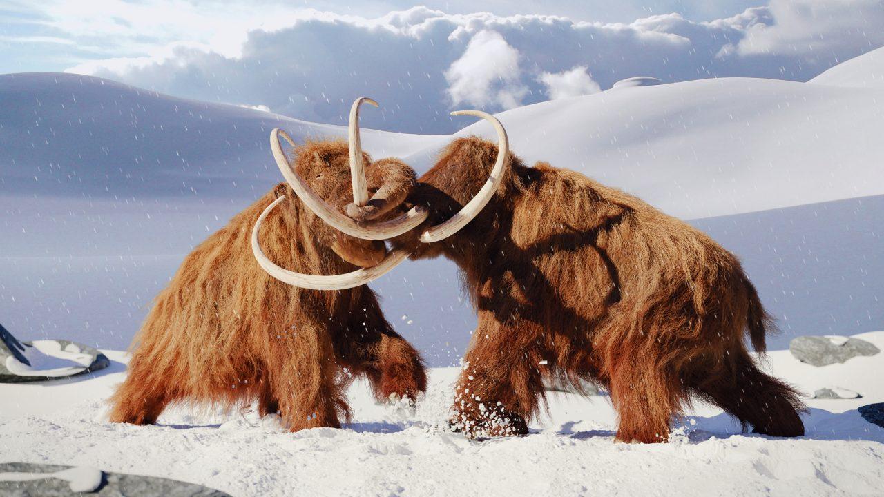 To mammuter som slåss med hverandre i en vinterlandskap