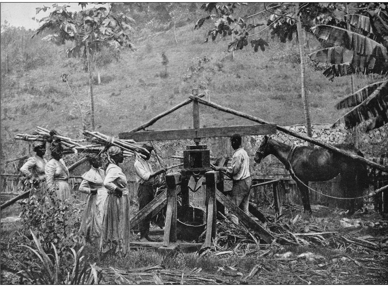 Bilde fra en sukkerplantasje på Jamaica