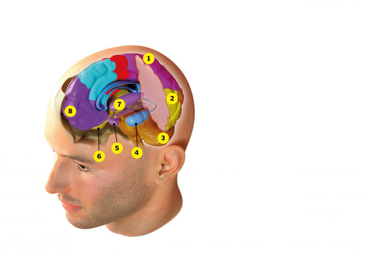 Illustrasjon av hvordan minnebanken er satt sammen