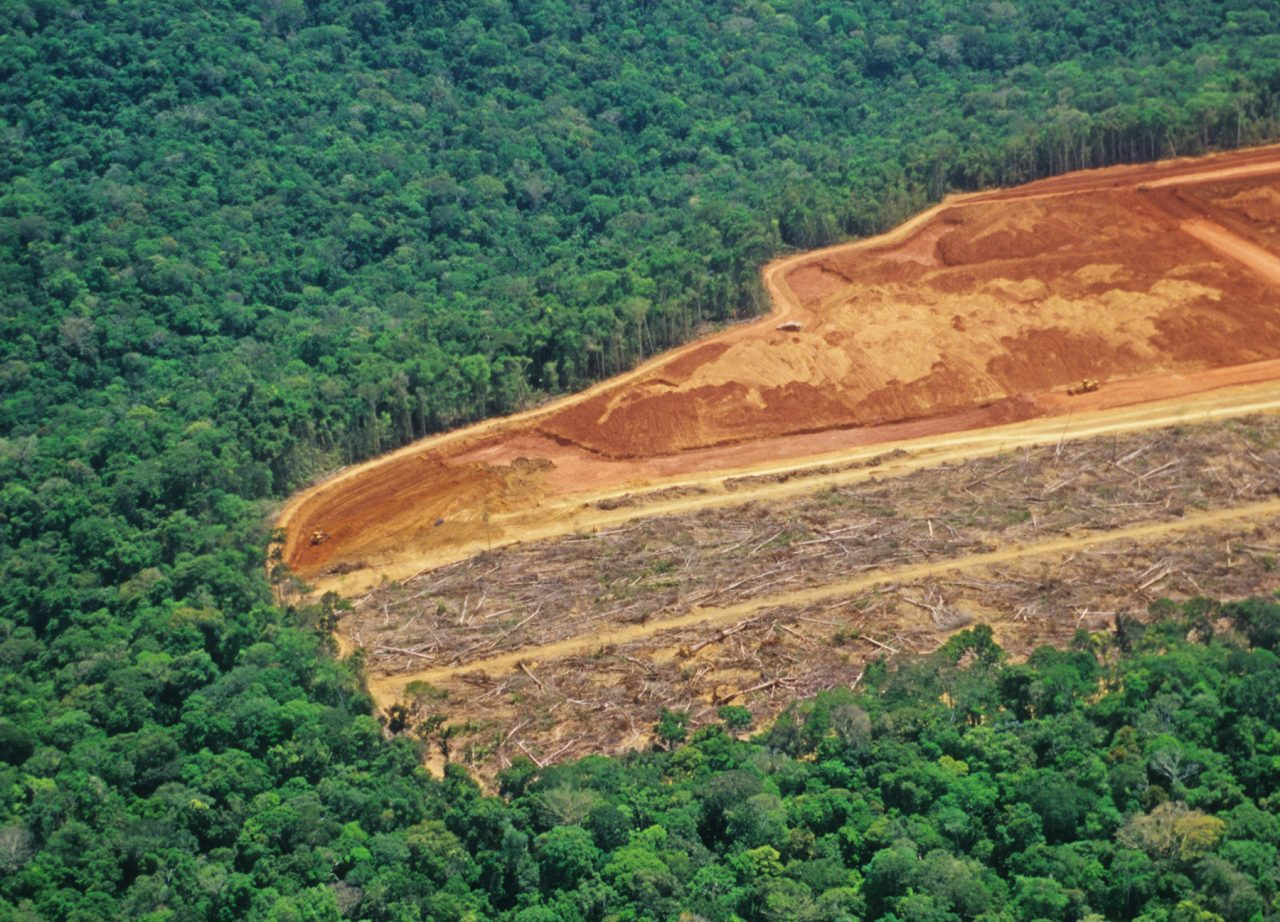 Avskoging i Amazonas