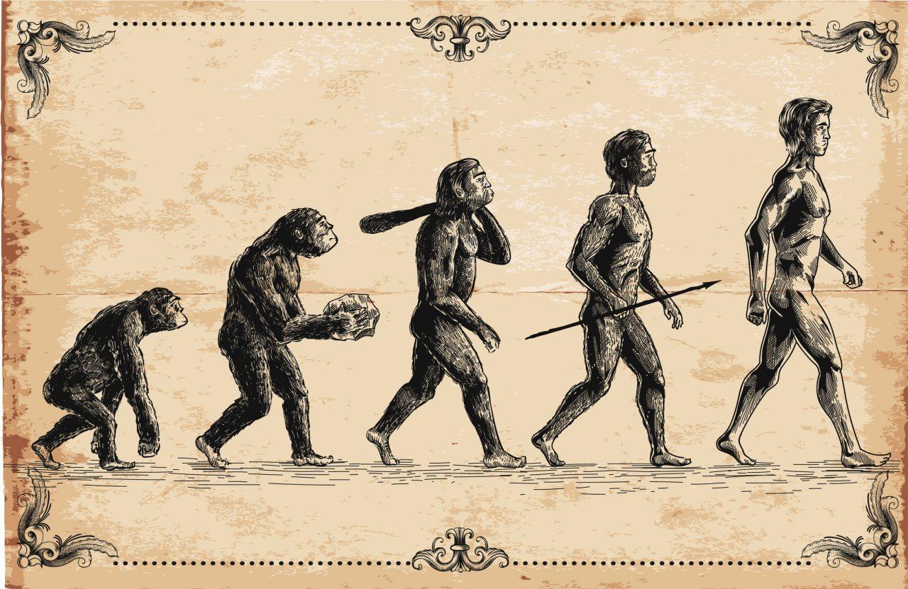 Menneskets evolusjon, fra ape til dominerende pattedyr