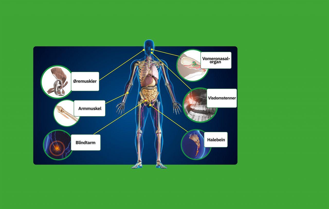 Vrakgods fra evolusjonen, en illustrasjon av hva Kroppen vår har spor av tidligere egenskaper vi ikke trenger lenger