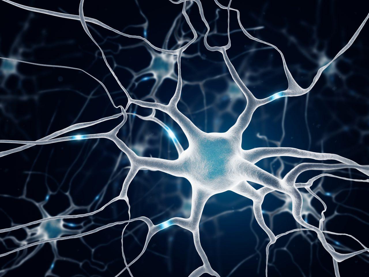 Nerveceller i hjernen