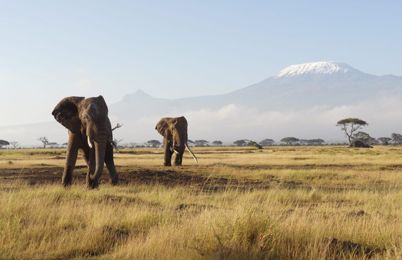 Kilimanjaro og elefanter