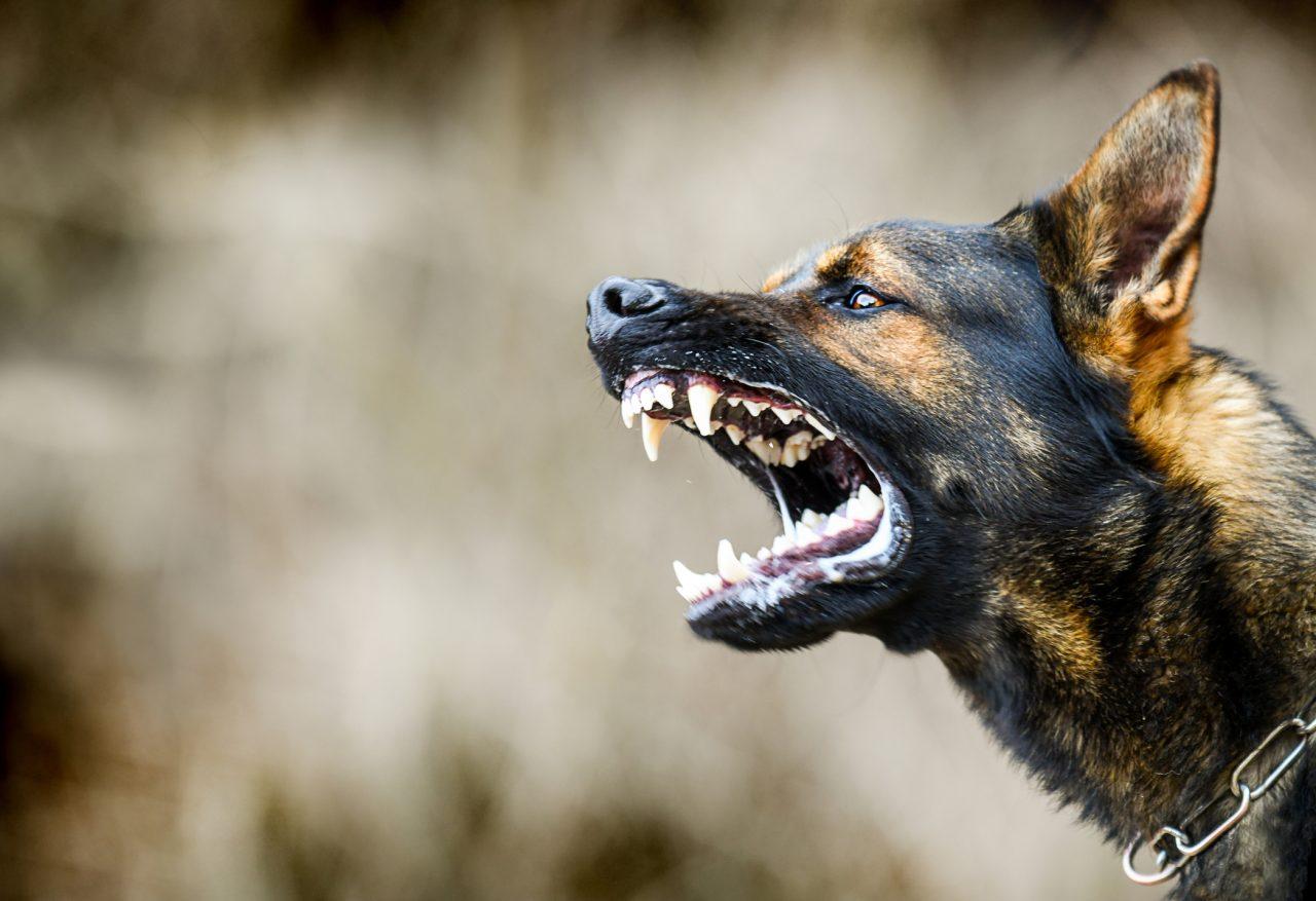 Hund som bjeffer
