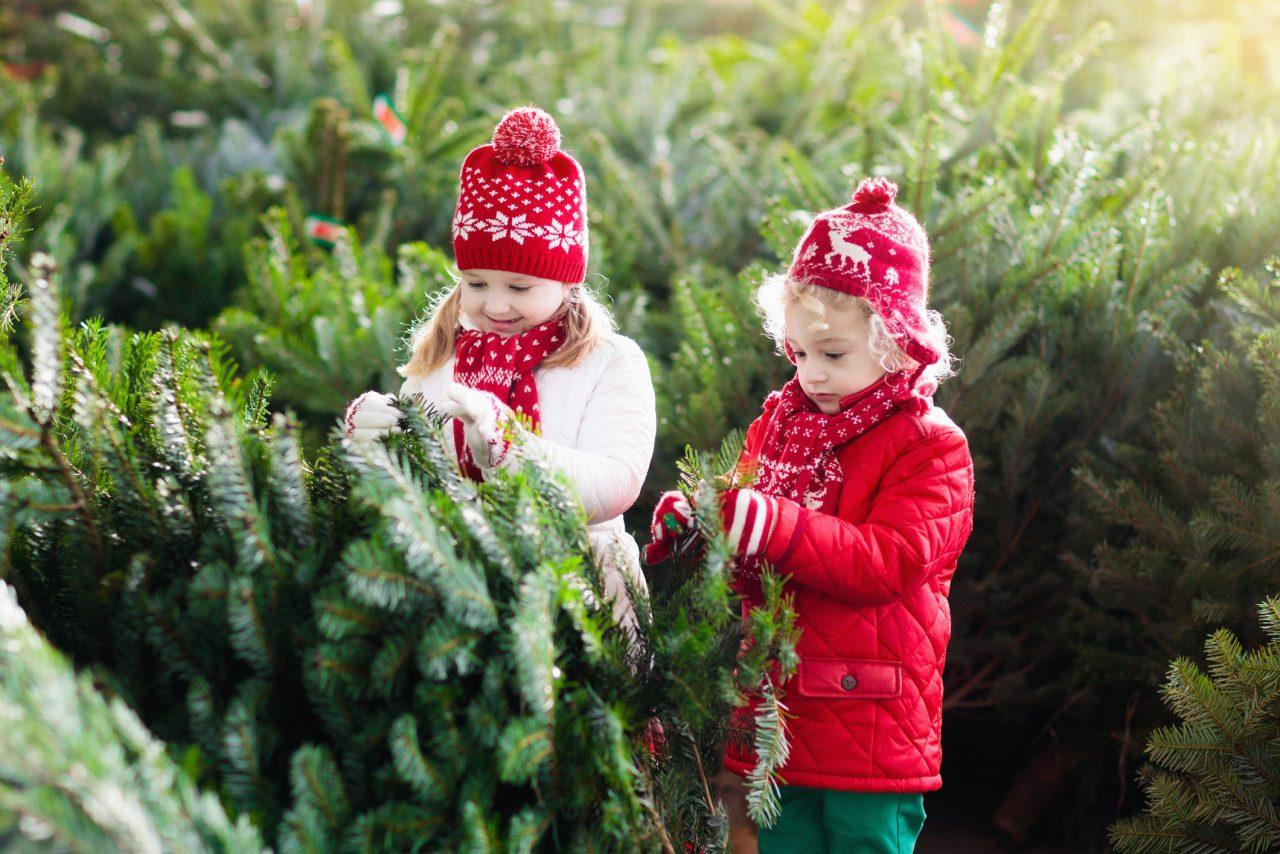 To barn som velger ut et juletre