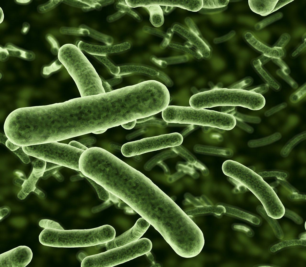 Bakterier sett gjennom et mikroskop