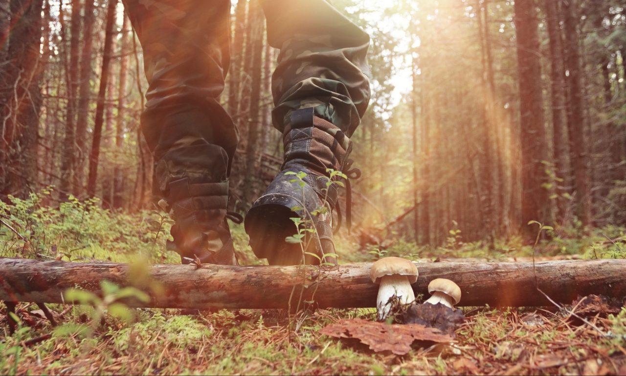 Person i militæruniform tråkker over ventet tre i skogen. Like ved stammen står to sopper.