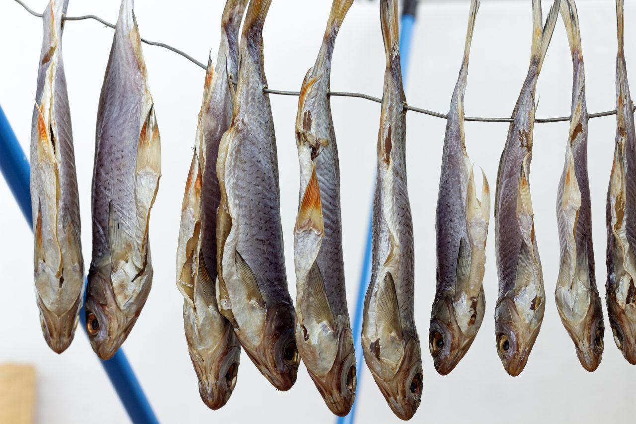 Tørfisk til tørk på snor