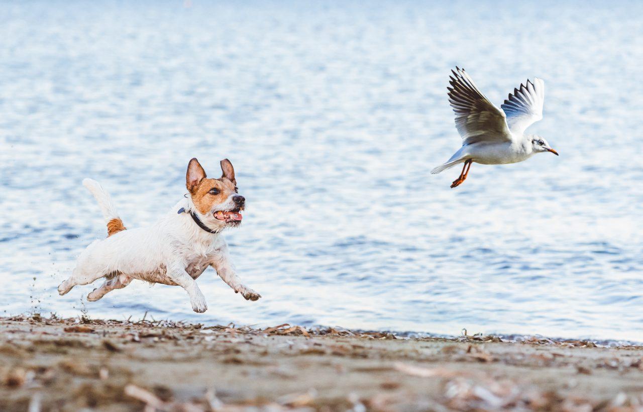 Hund og fugl